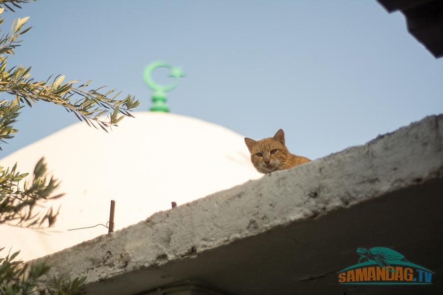 Hıdır Cafer El Tayyar Ziyareti